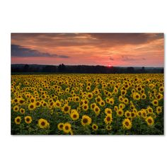 Trademark Art 'Sunflower Taps' by Michael Blanchette Photographic Print on Wrapped Canvas Size: