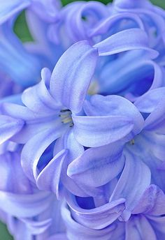 Periwinkle is perfect for Stomach Cancer November is Stomach Cancer Awareness