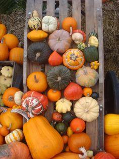 Homebuildlife: Pumpkin Parade at Kew Gardens