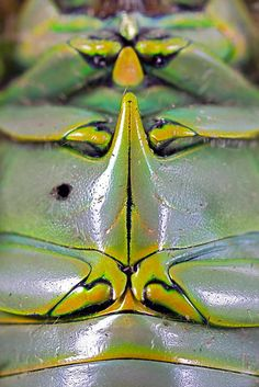 Macro view of the underside of a green scarab beetle, revealing its intricate plates of armor, Monteverde Cloud Forest Reserve, Costa Rica by Brett Cole