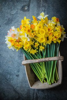 fentongollan daffodils grown in cornwall with care for the environment and sent direct from the farm by post #britishflowers #sustainable #frombritainwithlove #flowers