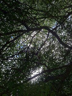 BAITOBEK ENDAY: Atardecer (lo que una persona ve a los pies de un ...