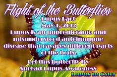 FLIGHT OF THE BUTTERFLIES LUPUS FACT#1