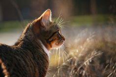 Cat, Kitten, Mackerel, Cat Face, Domestic Cat, Mieze