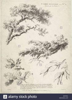 Galaxy Drawings, Ink Pen Drawings, Realistic Drawings, Landscape Pencil Drawings, Landscape Sketch, Nature Sketch, Nature Drawing, Tree Sketches, Urban Sketching