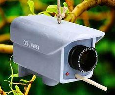 Security camera birdhouse! (Click for price)