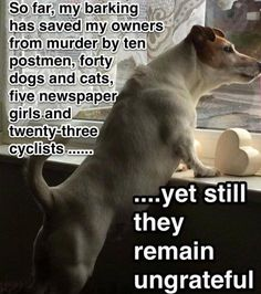 The Logic Of Every Dog