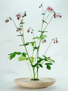 ikebana idea for common bush flowers, found everywhere