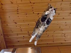 『まるです。』まるちゃんって飛ぶんだね〜o(^_^)o