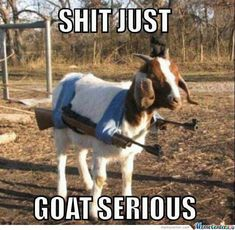 Shit Just Goat Serious Funny Memes Animal Meme Funny Quote Funny Quotes Humor Goat Humor Quotes Funny Pictures