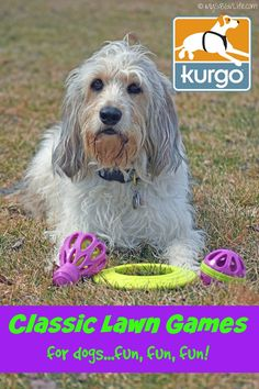 My GBGV Life | Have some warm weather fun with your dog and the new Classic Lawn Games for dogs from @Kur