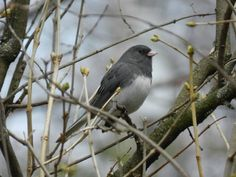 Bird in my backyard..