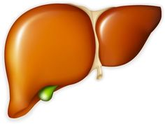 Healthy liver and gallbladder Health Cleanse, Liver Cleanse, Gallbladder Flush, Liver Flush, What Is Healthy, Bile Duct, Healthy Liver, Health And Fitness Articles, Detox Your Body