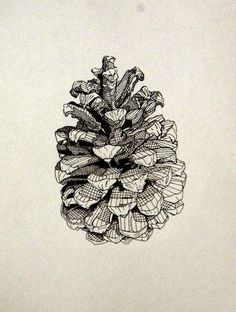 Pine Cone Ink Drawing