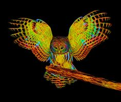 peace fractal images | Pamela Leigh Richards » Fractals Owl