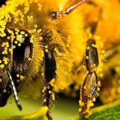 Viete o tom, že peľ je najvačší antioxidant, ktorý sa nachádza v prírode? #nature #priroda #zdravie #vcela #antioxidant
