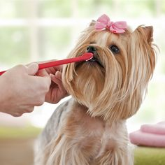 Hygiene For Your Dog In 3 Easy Ways: http://www.primepetinsurance.com.au/blog/hygiene-for-your-dog-in-3-easy-ways/