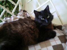Always Crave Cute- Black Cat Love It's my Fée!  I miss you sooooo much :(