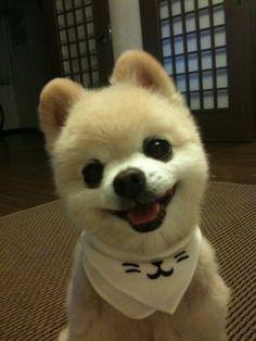 puppy | name Shunsuke kun :)