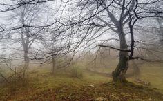 Landscapes nature fog secret branches (1920x1200, nature, fog, secret, branches)  via www.allwallpaper.in