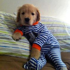 puppy in pajamas - Imgur