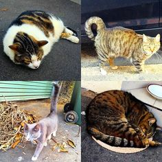 4 cats in 4 minutes in #Redfern this afternoon ... #cat #catsofinstagram #cats #catstagram #innerwest #innerwestsydney #innerwestisbest #innerwestcats #darlington #chippendale #camperdown #vscocam #vsco #iphone #iphone6 #combine #4 #insta #instacool #instagram #instagood #instadaily #instamood #instalike #urbancats by innerwest4lyf