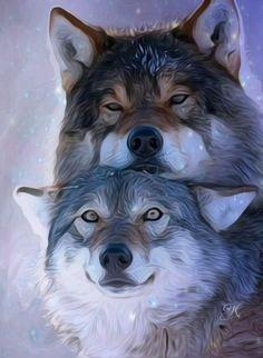 Animal Drawings, Cute Drawings, Amazing Drawings, Beautiful Creatures, Animals Beautiful, Animals And Pets, Cute Animals, Wolf Hybrid, Shadow Wolf