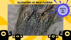 Reviews for Kids   An Airboat Ride and Feeding Alligators with Wild Florida