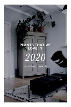 Plant trends 2020 Trends, Plants, Stuff To Buy, Home Decor, Decoration Home, Room Decor, Plant, Home Interior Design, Beauty Trends