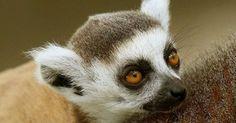 osCurve Brasil : Terra entrou em novo período de extinção em massa,...