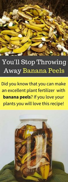 Save your banana peels and use them to fertilize your soil.