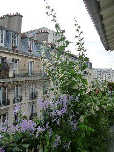 Die Blumen auf meinem Pariser Balkon Ende Juli The flowers on my Parisian balcony in late July,