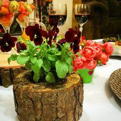 Amor perfeito plantado em mini troncos de madeira.