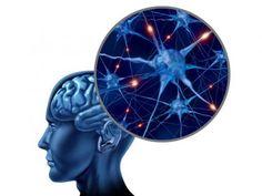 10 alimentos vitales para tu cerebro  - Alimentos inteligentes