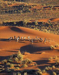 Kalahari Desert,Namibia: