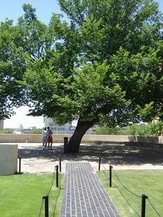 The Survivor Tree. My favorite tree in the whole world... for everything it stands for. It touches my heart in a way I cannot put into words. The Oklahoma City Bombing Memorial.
