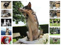 Kangaroo, Dogs, Animals, Rheinland, Baby Bjorn, Animales, Animaux, Pet Dogs, Doggies