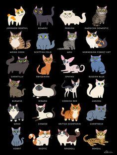 CATS on black Art Print by lilichin I Love Cats, Cute Cats, Funny Cats, Warrior Cats, Cat Races, Ninja Cats, Cat Behavior, Cat Breeds, Types Of Cats Breeds