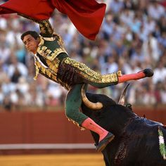 « @TIME photo editors share 50 astonishing animal shots of 2015, including this shot of Spanish matador David Galvan being tackled by a bull during a… »
