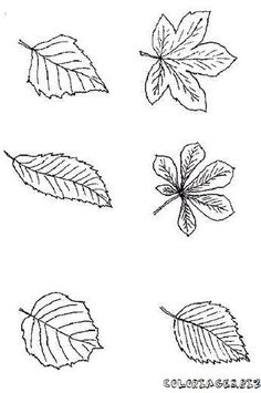 coloring page Leaves on Kids-n-Fun. Coloring pages of Leaves on Kids-n-Fun. More than coloring pages. At Kids-n-Fun you will always find the nicest coloring pages first! Leaf Coloring Page, Cool Coloring Pages, Printable Coloring Pages, Coloring Pages For Kids, Biology For Kids, Leaf Identification, Leaf Outline, Wood Burning Patterns, Sugar Flowers