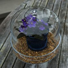 10 Common Terrarium Mistakes and How to Avoid them: African Violet Terrarium