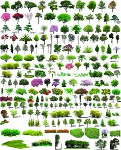 Horticultural plants PSD layered material trees of shrubs Guihua cherry blossom trees surrounded by flowers, Green plane trees pine ash PSD material download