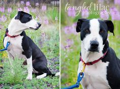 Panda lost his family when they moved to a place that didn't accept pets.  And, Panda wants nothing more than to find his own forever family where he can feel secure and loved once again.