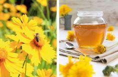 Quand les abeilles prennent soin de l'Homme