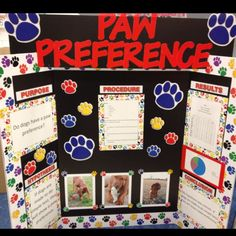 What Color Can Dogs See Best Science Fair Project