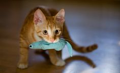 Cat Toys: Which Are