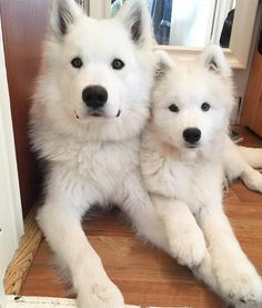 // KaufmannsPuppyTraining.com // Kaufmann's Puppy Training // dog training // dog love // puppy love //