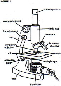 A study of the microscope and its functions with a labeled diagram diagram of microscope parts and function ccuart Choice Image