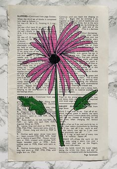 flower drawing - aster