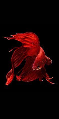 "chasingrainbowsforever: "" Fish by Visarute Angkatavanich """